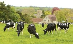 Idyllinen kuva Britanniasta MRSA-vapaan karjan alueena on historiaa.