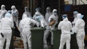 Aasiasta aikoinaan lähteneen ja sittemmin kautta maailman levinneen lintuinfluenssan H1N1-viruksen takia muun muassa Kiinassa teurastettiin joukkoittain siipikarjaa. Uuden H7N9-virustyypin yleisyydestä ei ole vielä minkäänlaista tietoa.