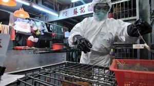 Aikaisemmin maailmalle levinneen H1N1-viruksen aiheuttamat varotoimet opettivat kiinalaiset toimimaan oikein vakavien virusepidemioiden uhatessa.