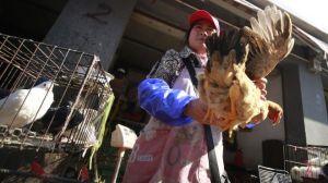 Viranomaiset varoittavat kiinalaisia käsittelemästä eläviä kanoja ja muuta siipikarjaa ja välttämään läheistä kontaktia kaikkiin lintuihin.