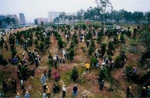 Jopa 600 miljoonaa kiinalaista osallistuu vuosittaisiin puunistutus- ja metsitystalkoisiin.