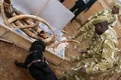 Keniassa laittoman norsunluun nuuskijat ovat tehneet merkittäviä löytöjä Mombasan satamassa.