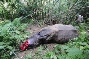 Intian Assamin osavaltiossa sijaitsevan Kazirangan kansallispuiston sarvikuonoja tapetaan tehostuneesta riistanvalvonnasta huolimatta.