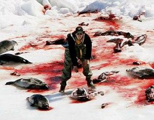 """Kanada vastustaa kaupallisen hylkeenpyynnin kieltoja vetoamalla hyljekannan kasvuus, kalakannoille ja kalastuskelle aiheutuviin haittoihin, ja lisäksi ministerit sanovat kuuttien tappamiisen muuttuneen """"humaanimmaksi"""". Ainakin viimeksi mainittu peruste tuntuu lievästi sanottuna kaunistellulta."""