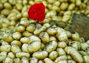 Peruna on todellinen aarre terveellisen ruokavalion hinta/laatu -suhteessa.