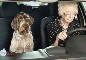 Koira on mukavaa matkaseuraa, mutta kaverin läsnäolo saattaa haitata ainakin ikäihmisten ajosuoritukseen keskittymistä.