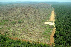 Amazonia laajamittaisia hakkuita, Para, Brasilia.