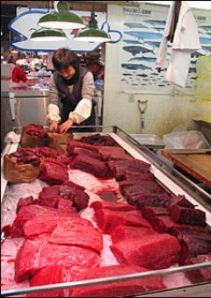 Sillivalaan liha on hyvin suosittua ja paljon käytettyä Japanissa–  edelleen ihmisten ruokapöydissä, vaikka koirat eivät luksusvälipaloilla enää herkuttelisikaan.
