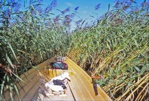 Rantoja reunustavat järviruokokasvustot ovat ikävä hidaste veneilijälle, mutta ravinteiden pidättäjänä ruoko on erinomainen apu vesiensuojelulle, ja lisäksi ruo'on valtavaa biomassan tuotantoa voitaisiin käyttää energiana.