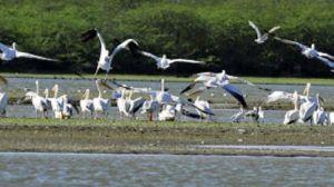 Soor Sanovarin linnut voittivat insinöörikoulutuksen intialaisessa oikeudessa.