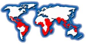 Denguekuumeen pääasialliset levinneisyysalueet vuonna 2007.