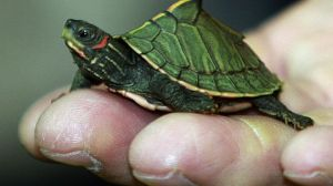 Elävistä eläimistä kilpikonnat ovat runsaslukuisimpia salakuljetuskohteita, mutta esimerkiksi Thaimaan tullin tarkastuksissa on löytynyt jopa eläviä tiikereitä.