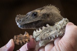 Barbaturex morrisoni oli noin 40 miljoonaa vuotta sitten elänyt kasvisssyöjä.