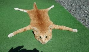 """Kolarissa kuolleen kissan """"talja"""" oli nettihuutokaupassa tuhannen paikallisen dollarin eli noin 615 euron arvoinen."""