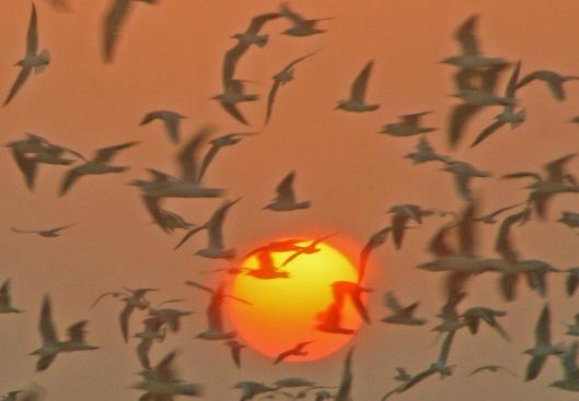 """Jopa puolet maailman lintulajeista lentää """"elämän ehtoopuolella"""" ilmastonmuutosken edetessä."""