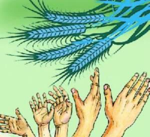 Yli 600 miljoonaa köyhää intialaista saa jatkossa tarvitsemaansa erittäin edullista viljaa valtion tukeman ohjelman ansiosta. Ruoka-apuohjelma on lajissaan maailman kattavin.