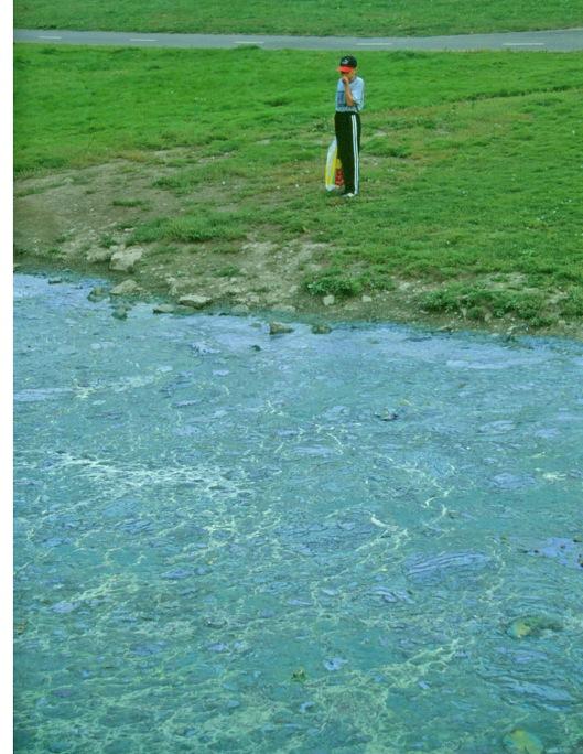 Rannalle ajautuneet sinilevät (syanobakteerit) näyttävät luontaantyöntäviltä ja inhottavilta, ja valitettavan usein ne ovat vaarallisen myrkyllisiä. Ihmistoiminnan rehevöittämissä vesistöissä syanobakteerit ovat myrkyllisempiä kuin muissa vesissä.