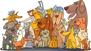 Kissat ja koirat elättävät ihollaan melkoisen monilajista stafylokokkien joukkoa, jossa piileskele myös huolestuttavan paljon antibiooteille vastustuskykyisiä bakteereeja.