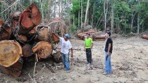 Amazonian hakkuita aletaan valvoa paikan päällä entistä tarkemmin.