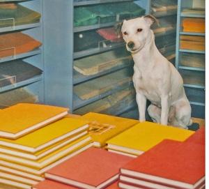 Värikkäässä maailmassa on vaikea tehdä valintoja: Jos kirjassa ei ole kansitekstejä, on vaikea päättää esimerkiksi keltaisen ja oranssin välillä, tai olisiko suosikkivärissä vaalea sävy tummempaa vaihtoehtoa parempi.