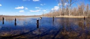 Kunnostetun rantakosteikon kelvollisuutta hauen kutupaikaksi on testattu – hyvällä menestyksellä – myös Yhdysvaltain Suurten järvien alueella Wisconsinissa.