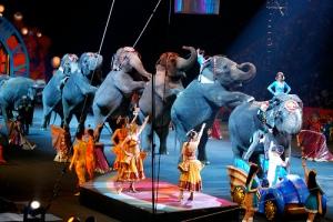 Eläinten oikeuksien puolustajat tahtovat estää norsujen ja muiden villieläinten esiintymiset sirkuksisa. Intiassa norsujen käyttökielto etenee, ja vastaava hanke on vireillä muun muassa Los Angelesissa Yhdysvalloissa.