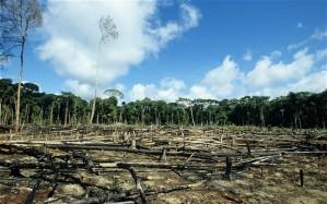 Tehostunut valvontakaan ei ole pystynyt pitämään Amazonian hävitystä kurissa.