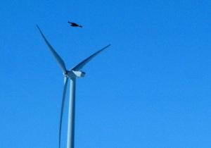 Kotka ei välttämättä näe suurtakaan tuulivoimalaa, ja vaikka näkisikin, roottorien aiheuttama pyörteinen ilmavirtaus voi vetää linnun myllyn lapojen survottavaksi.