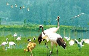 Xinghun kansallinen kosteikkopuisto eteläisessä Guangdondin maakunnassa on yksi Kiinan merkittävimmistä – ja kansainvälisestikin vahvistetuista kosteikkojensuojealueista.