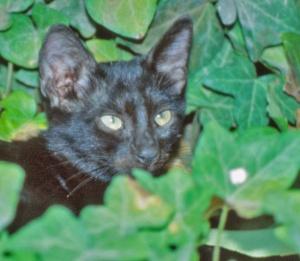 Kissaa on perinteisesti pidetty salaperäisenä eläimenä, mutta meille saavuttamaton näkökyky tekee kateista jopa oletettua tuntemattomampia.