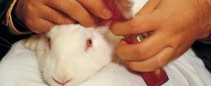 Yhä useampi kansalainen tahtoisi kieltää eläinkokeet.