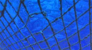 Pienikin vaurio verkkoaltaassa antaa kasvatuskaloille  mahdollisuuden karata luontoon. Reikiä suurempi vaara ovat kuitenkin myrskyt, jotka tuhoavat vuositatin isojakin laitoksia ja aiheuttavat jopa satojen tuhansien lohien pääsyn vapauteen yhdellä kerralla.