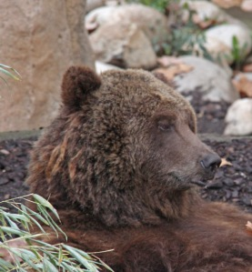Suomen karhujen sukulaissuhteet suuntautuvat vahvasti itään.