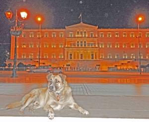 Kreikan parlamentin edessä loikoileva kulkukoira on kaulan tunnistetietojen mukaan jo osallisena villiintyneiden eläinten ohjelmassa, joka alkaa kerätä kissoja ja koiria keskitettyihin suojiin – toivottavasti adoptiota ja pysyvää kotia odottelemaan.