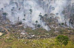 Valtaosa Amazonian sademetsien hakkuista ja kaskeamisista tehdään luvattomasti.