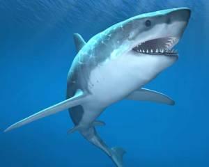 Haiden hampaisiin joutuu – ja kuolee –  huomattavasti enemmän miehiä kuin naisia.
