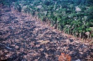 Amazonian sademetsien hävityksellä on maailmanlaajuisia vaikutuksia, joten hakkuutahdin on hidastuttava.