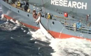 Japani on jatkanut kansainvälisin sopimuksin kiellettyä valaanpyyntiä tieteellisen tutkimuksen nimissä, mutta alusten viimeisin matka todella täyttänee aikaisemmin epäilyksen alaisiksi saatetut  tutkimusväitteet.