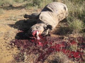 Vuosi 2014 oli kaikkien aikojen synkin Etelä-Afrikan sarvikuonoille.