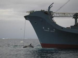 Yushin Marun tehtävänä oli pyyntikaudella 2014–2015 vain tarkkailla eteläisten merien valaita. Aikaisemmin alus on ollut kaupallisessa pyynnissä.
