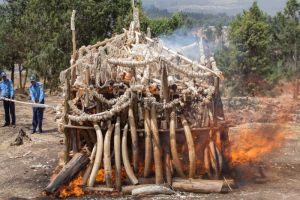 Takavarikoidun norsunluun poltolla afrikkalaiset valtiot korostavat nollatoleranssia salametsästystä kohtaan.