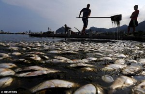 Kalastus – tai oikeammin jätehuolto – Rio de Janeiron rannoilla on antaa tätä nykyä paljon, mutta varsin ikävää saalista.