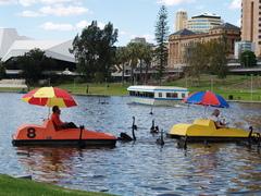 Adelaiden läpi virtaavaan Torrens-jokeen paikallisten joutsenten seuraksi saapuvat muuttolinnut joutuvat tarkkaan virustarkastukseen.