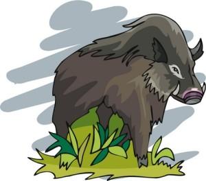 Villisian suosikkiravinnossa eli metsäsienissä on yhä niin suuria määriä vuonna 1986 Tshernobylin ydinvoimalaonnettomuudessa vapautuneita radioaktiivisia aineita, ettei riistaeläinten lihaa saa myydä.