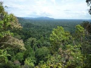 Indonesiassa on vielä kymmeniä miljoonia hehtaareja luonnontilaisia sademetsiä, ja niiden kaupallisia hakkuita rajoitetaan ainakin vielä kahden vuoden ajan. Taloudellisesti tärkeät hankkeet voivat kuitenkin saada hakkuulupia myös suojeluilla alueilla.