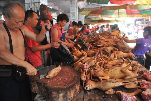 Juhannusjuhlat kiinalaiseen tapaan. Yulinin koiranlihafestivaalien aikaan tapetaan ja syödään noin 10 000 koiraa.
