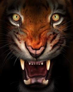 """Karjuntaääni paljastaa tiikerin """"henkilöllisyyden""""."""