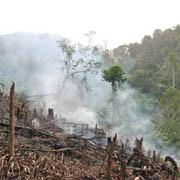 Länsi-Ghanan sademetsät luetaan yhdeksi maapallon tärkeimmistä biodiversiteettikeskuksista, mutta tätä nykyä laittomat hakkuut tuhoavat näitä arvoja hälyttävän nopeasti.