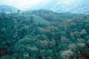 Keskisen Afrikan sademetsäalue on Amazonian jälkeen lajissaan maapallon toiseksi lajin yhtenäinen sademetsävyöhyke.