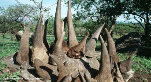 Sarvikuonojen salametsästystä ylläpitää kysyntä etenkin Kiinassa ja Kaakkois-Aasian maissa – ja tietysti laittoman sarviaineksen korkea hinta, jopa yli 60 000 euroa kilolta.